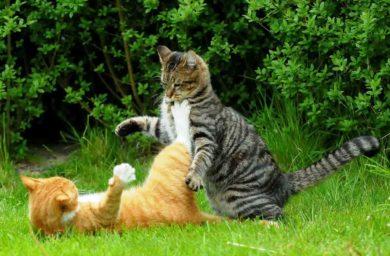 Кошки не ладят между собой, что делать