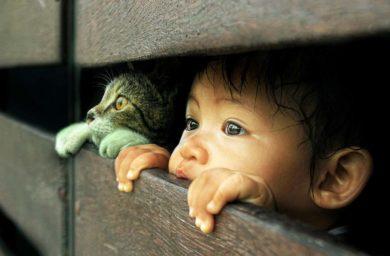 Кошки няньки: видео