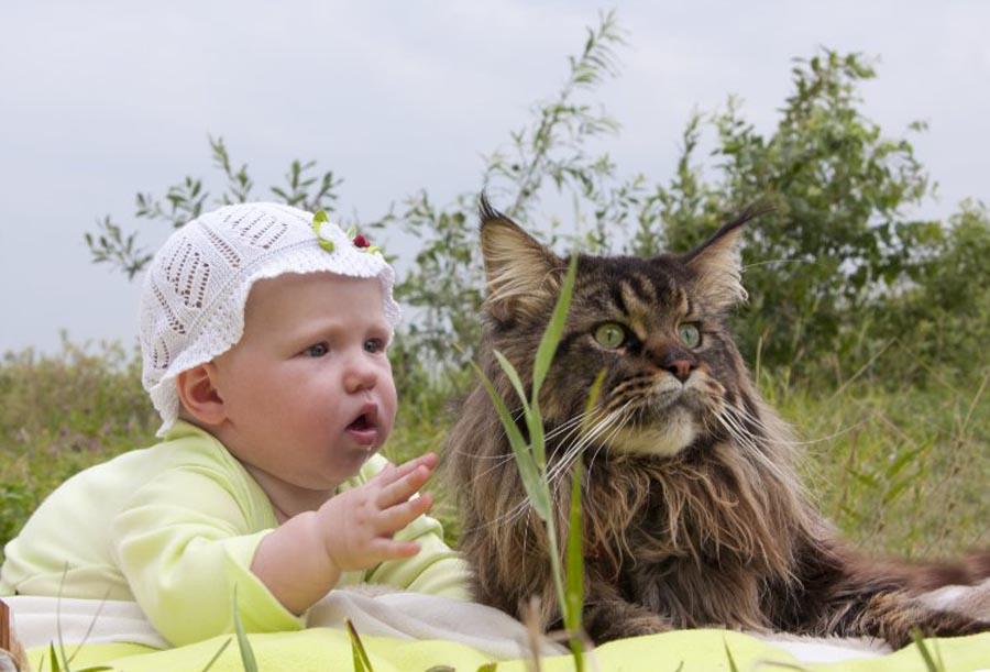 Кошки няньки
