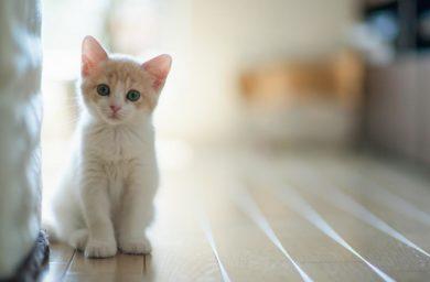 Кошки одни дома