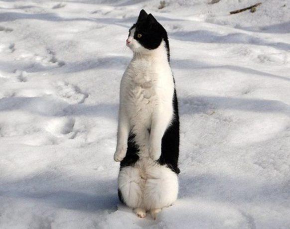 фото кошек в снегу