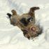 Кошки в снегу: фото и не только