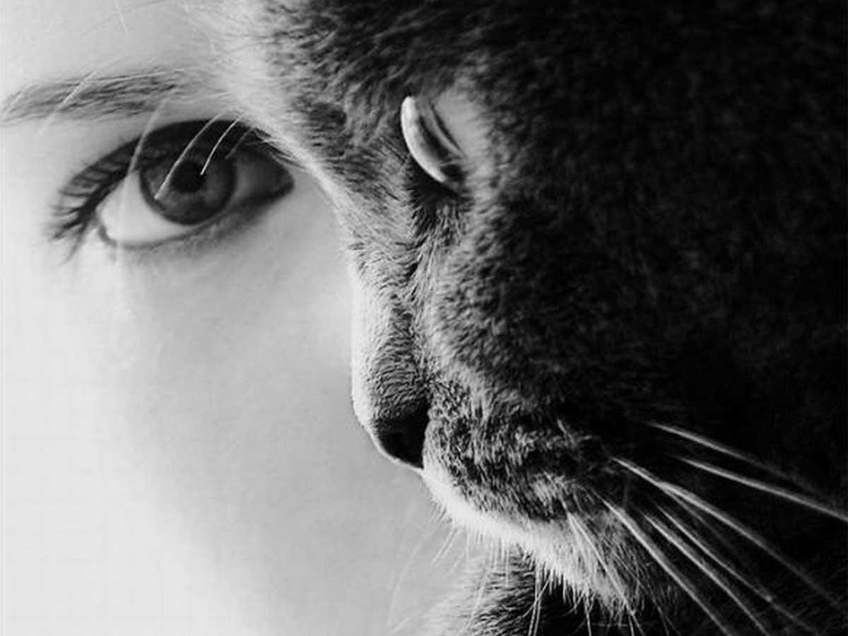 Как кошки видят мир: черно белым или цветным