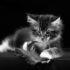 Правда ли, что кошки видят черно-белым мир, который их окружает?