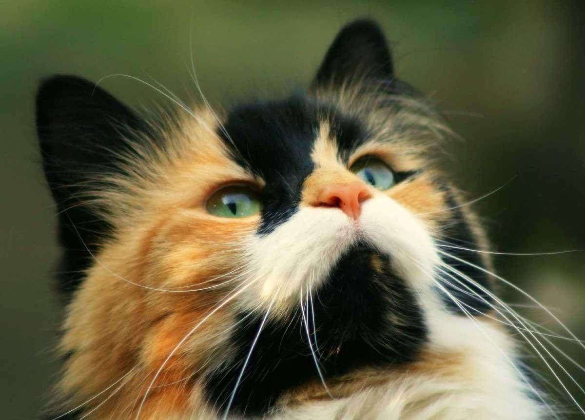 кошка черно белая картинка
