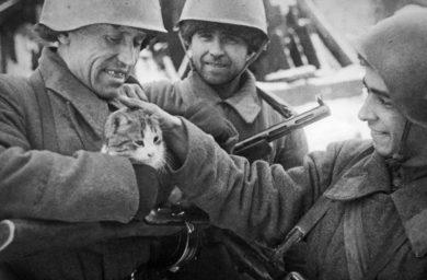 Кошки во время войны