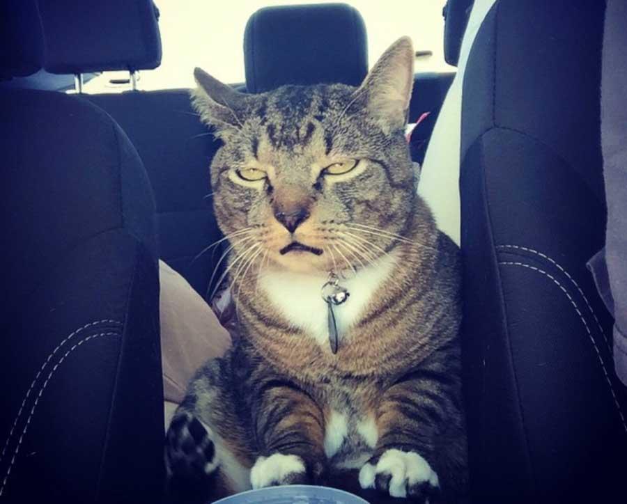 Почему кот слюнявит