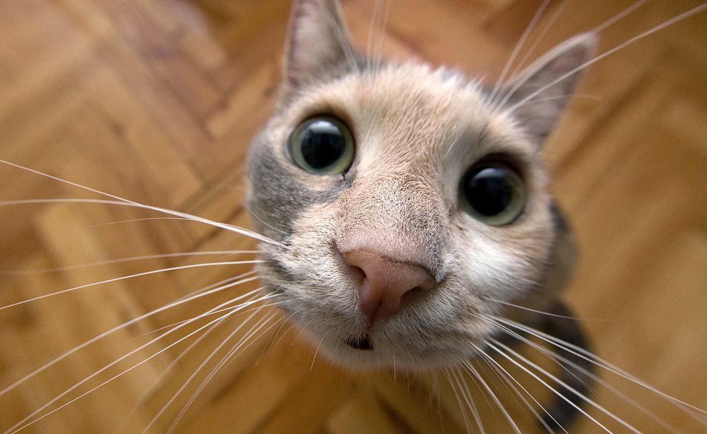Кот чихает что значит