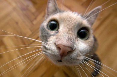 Кот чихает, что говорят на форуме