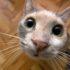 Если кошка чихает: форум в помощь