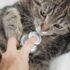 Отчего кот чихает и его рвёт?