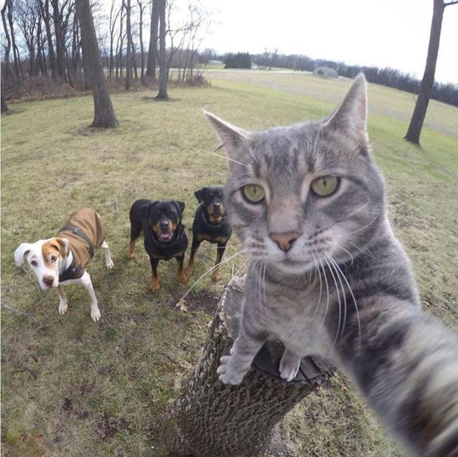 Кот делает селфи на фоне собак