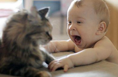 Кот и малыш: одна булка на двоих