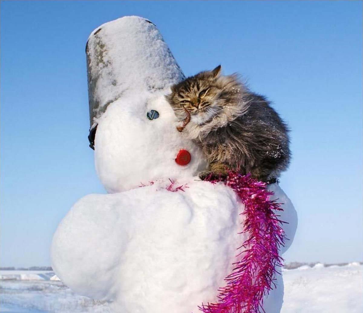Кот и снеговик