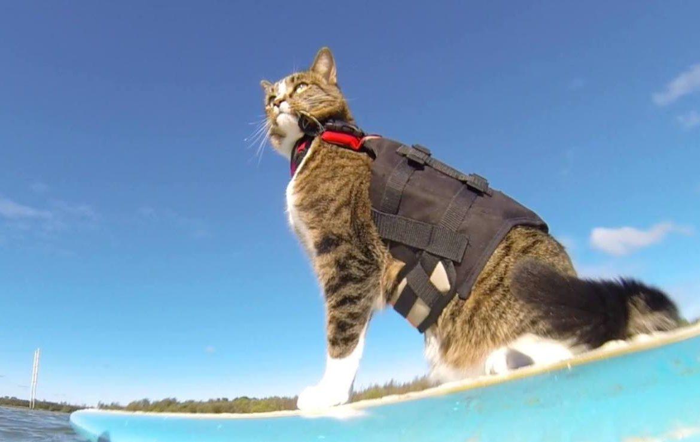 Коты-капитаны