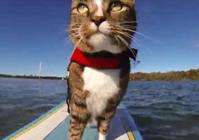 Кот капитан