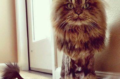 Кот миллионера