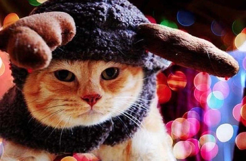 Самый модный и терпеливый кот