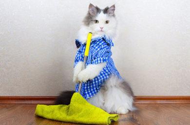 Кот моет пол: видео