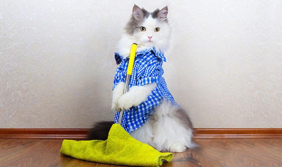 А ваш кот моет пол? Видео: помощники в уборке