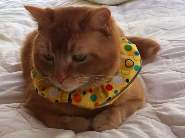 Кошка на даче летом