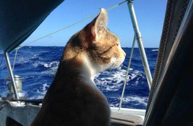 Амелия путешествует на яхте