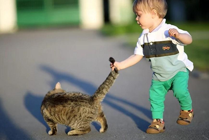 Кот нападает на ребенка