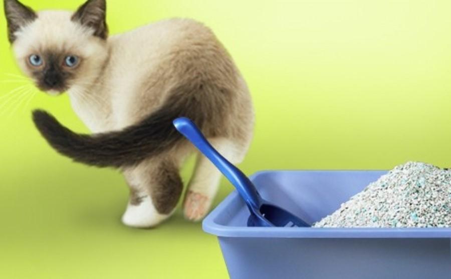 Кот не может перестать чихать
