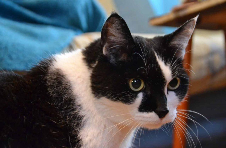 Учёный кот Ништяк почтил открытие НГУ