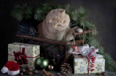 Кот охраняет подарки