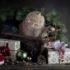Новогодний страж: кот охраняет подарки