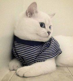 Кот кличке Коби
