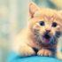 Кот поёт песню: видео домашнего концерта