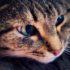 Чем лечить кошку, если она постоянно чихает, и у неё слезятся глаза?