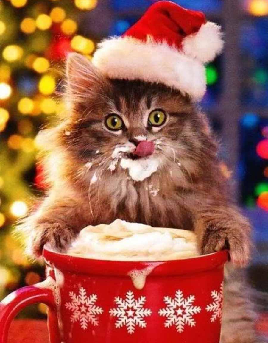 Кот поздравляет