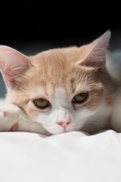 Кот проглотил мягкий провод