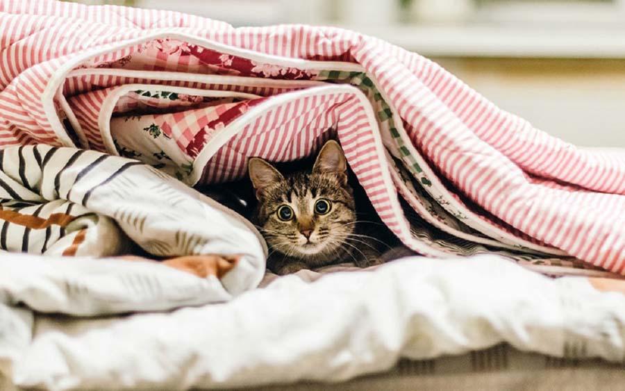 Почему кот прячется под одеялом