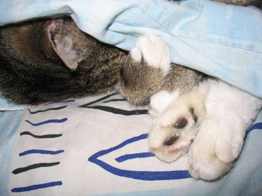 Кот прячется под одеялом