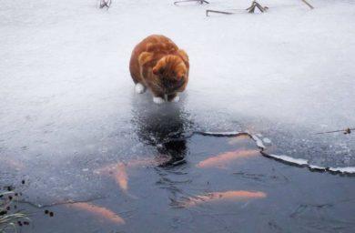 Видео кот рыболов