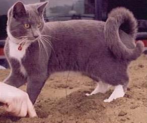 Если у кота задран хвост