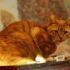 Сэр Филимон: кот-рыцарь на страже Выборгского замка