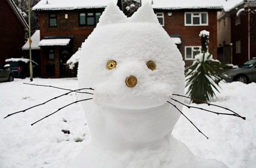 Кот-снеговик