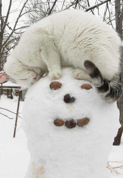 Фото: кот и снеговик