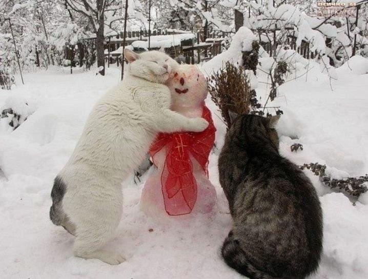 Фото: кошки и снеговик