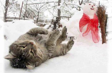 Фото котов и снеговиков