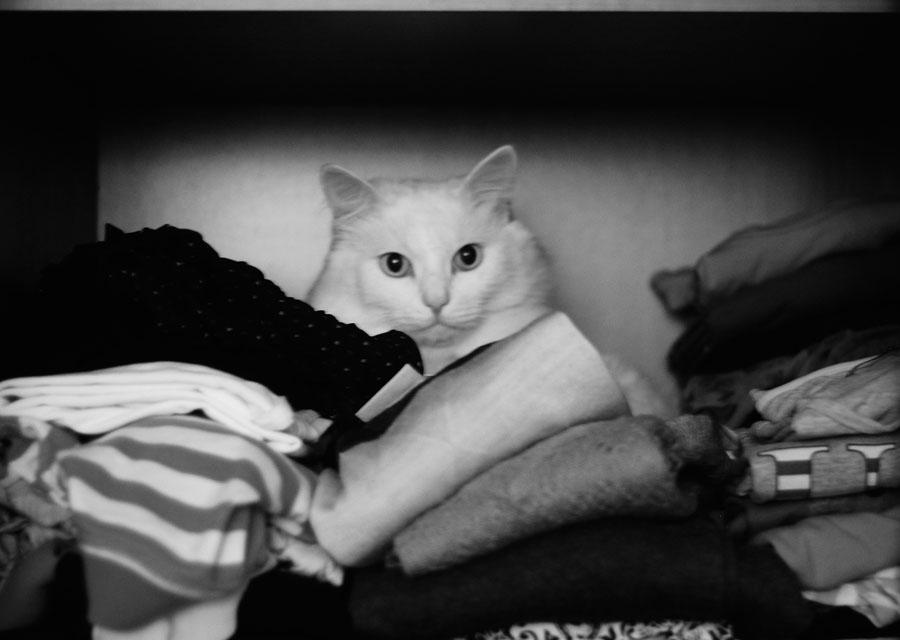 Кот стал прятаться в темные места