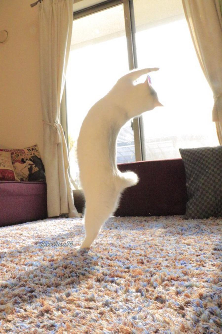 Кот-танцор