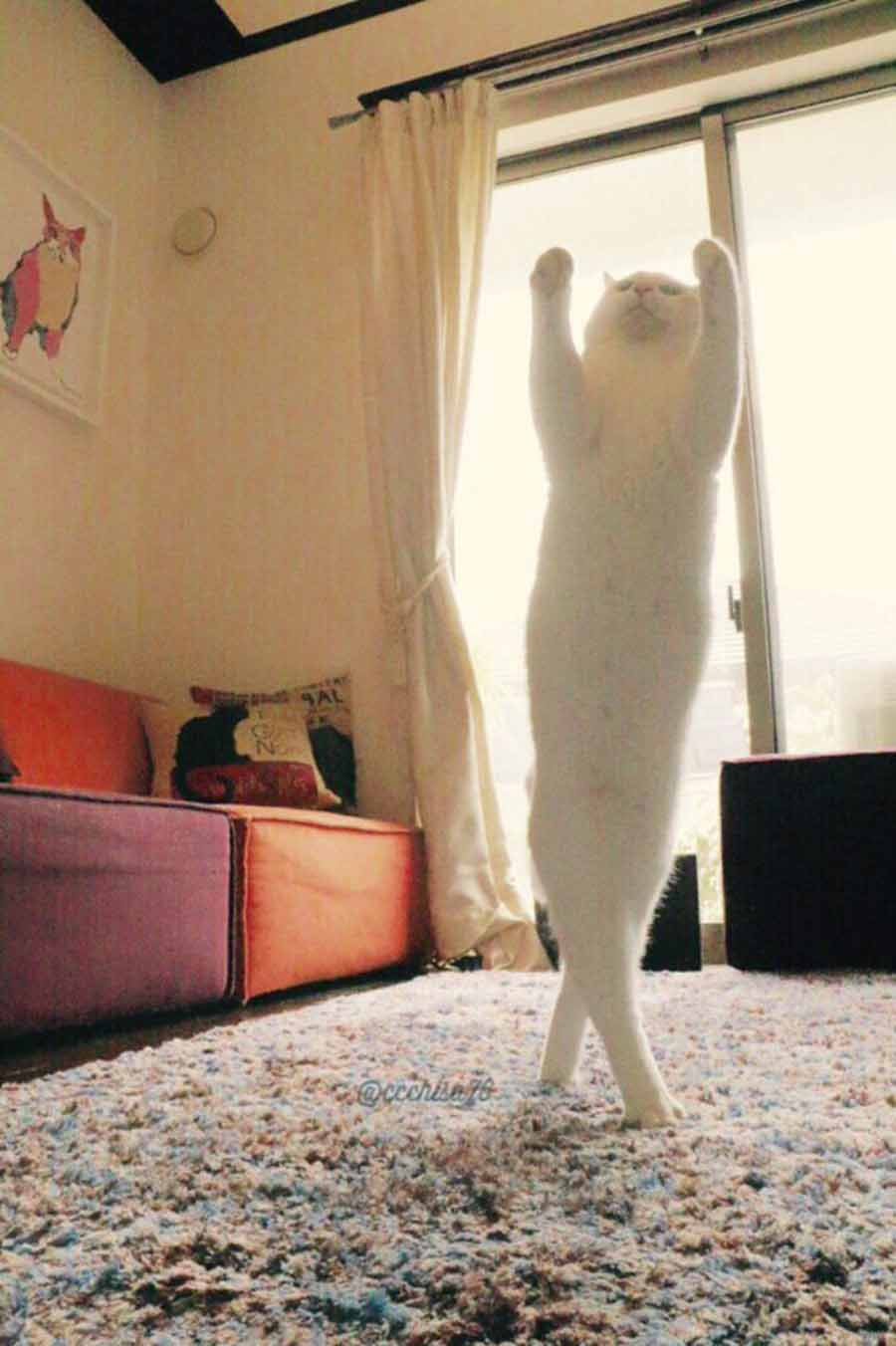 Кот танцор