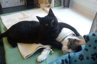 Кот ухаживает за другими животными