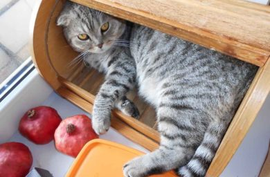 Кот в хлебнице: видео